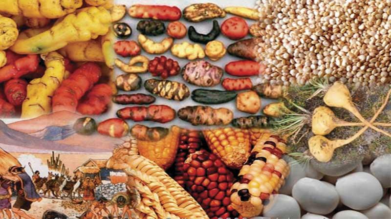 Alimentación imperio incaico